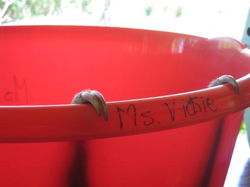 ms-vickie2