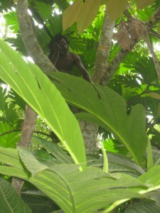 R in big leaves